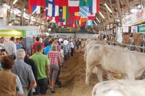 Charolais sorgte für großes Publikumsinteresse bei dieser Bundesfleischrinderschau