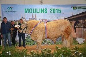 IBRA MIC (Gouverneur x Pinay)  Super Prix d'Honneur Males adulte 2015 Quelle: Schaukomitee Moulins